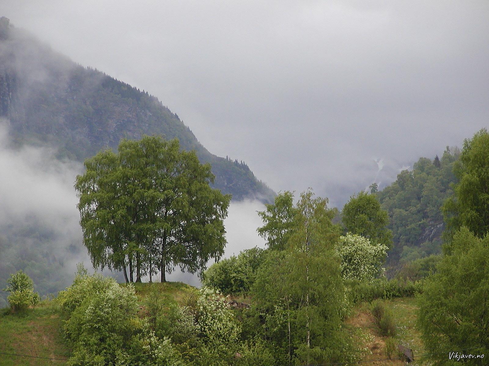 Moahaugane på Hove