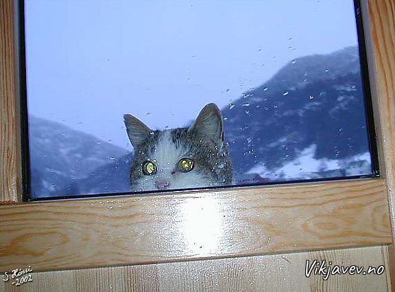 Katten vil inn