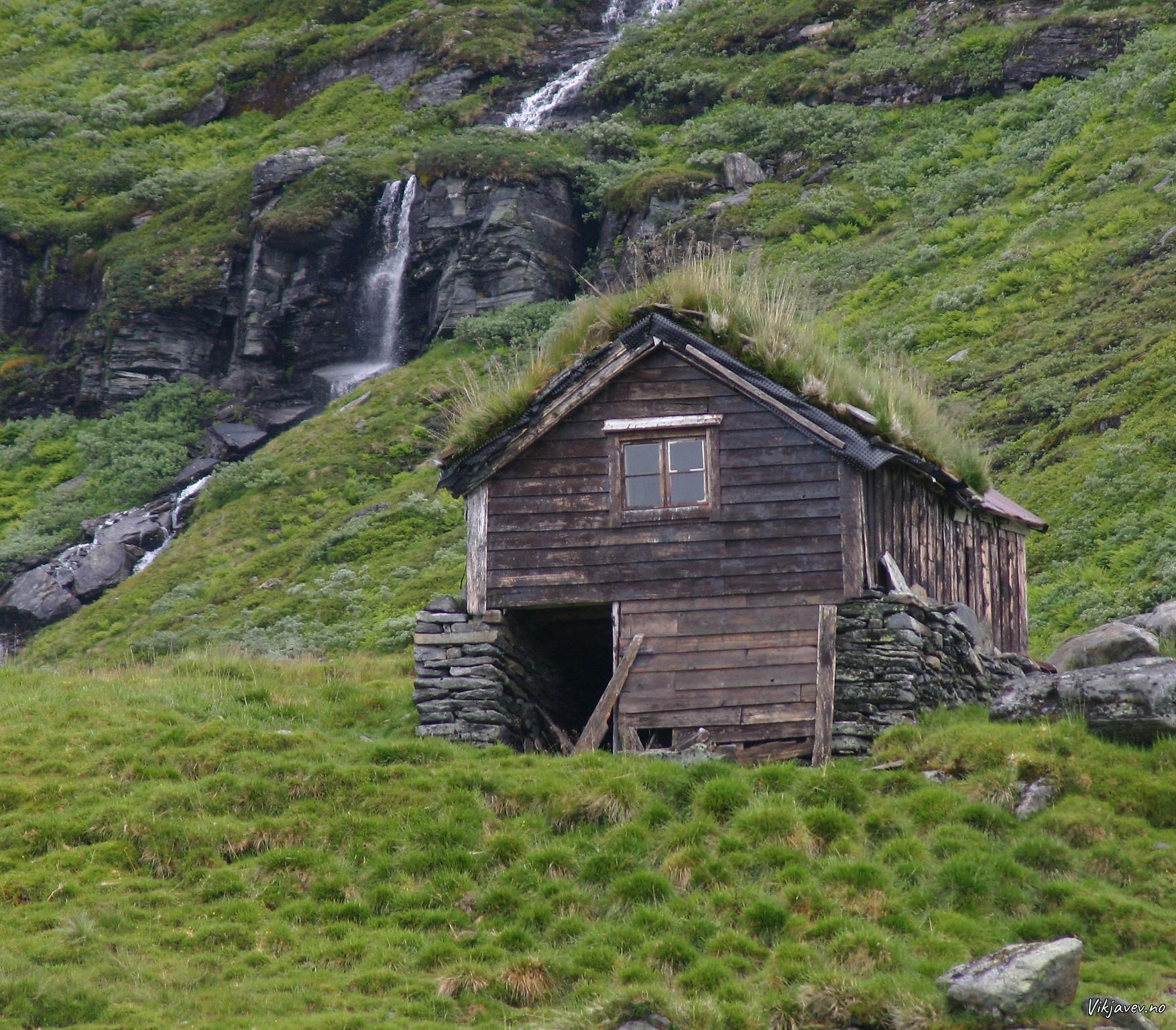 Sel i Åsdalen