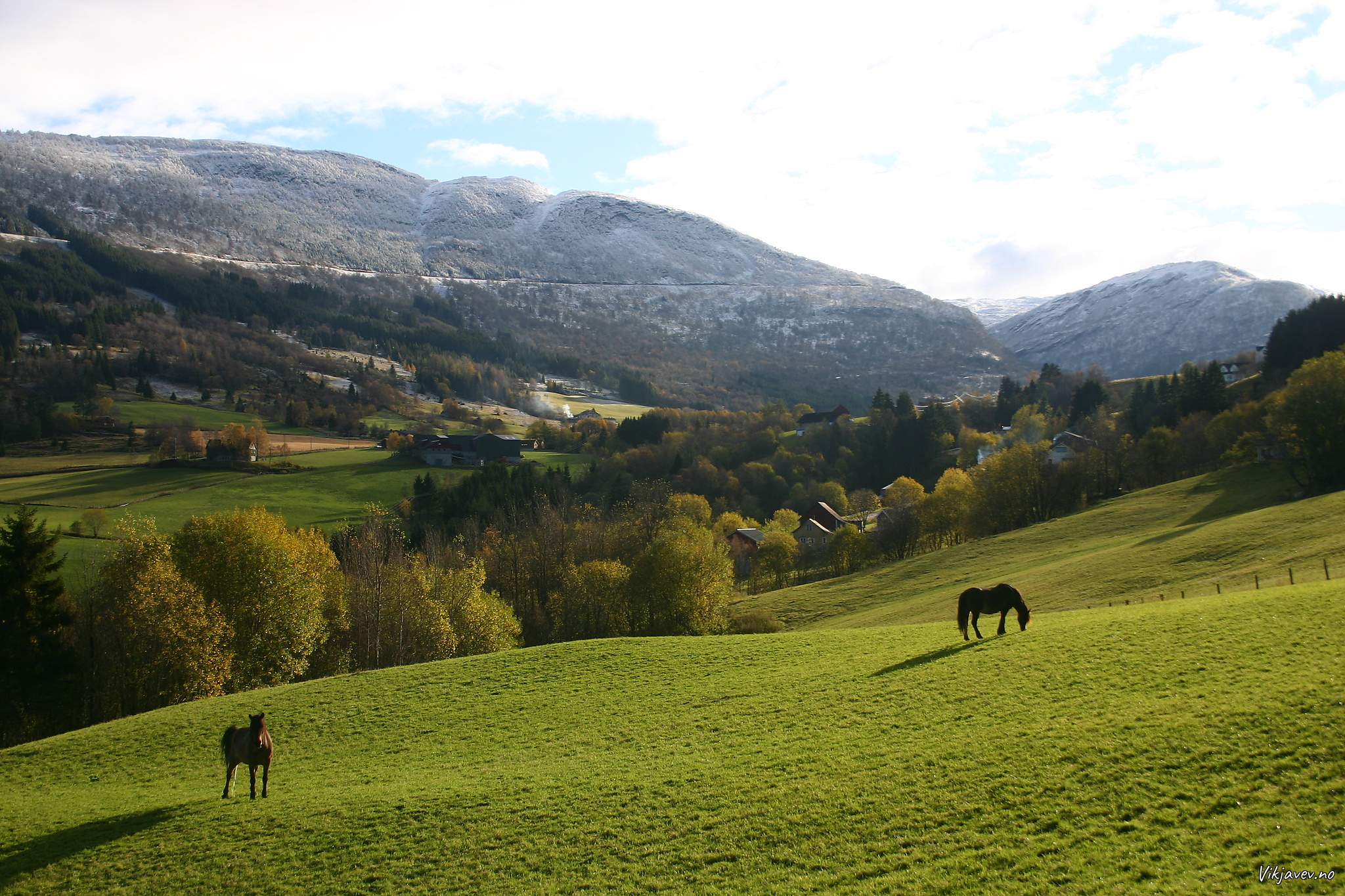 Hestar på Midlang