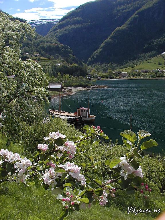 Fruktblomstring i Framfjorden