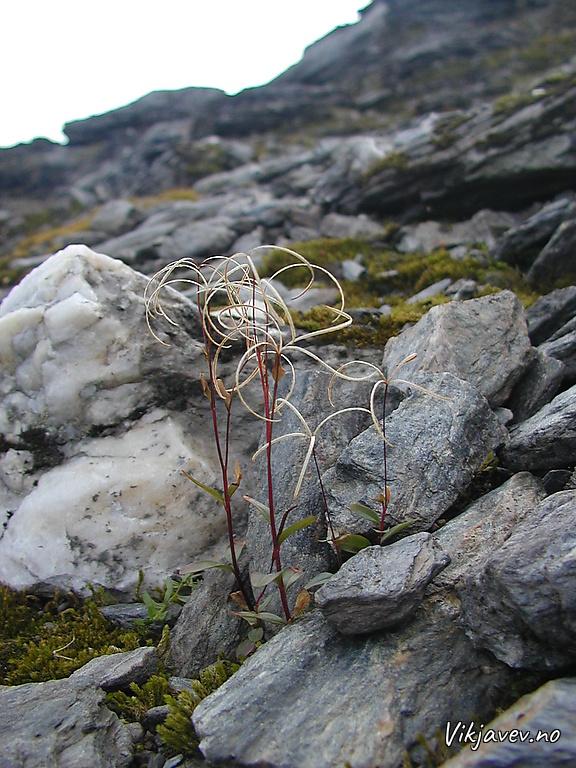 Plante i Hestagjelet