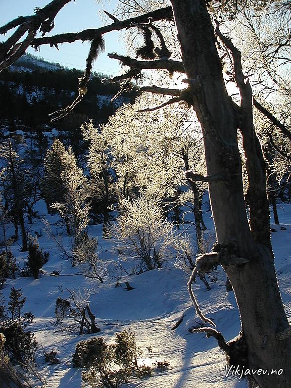 Rim på skogen