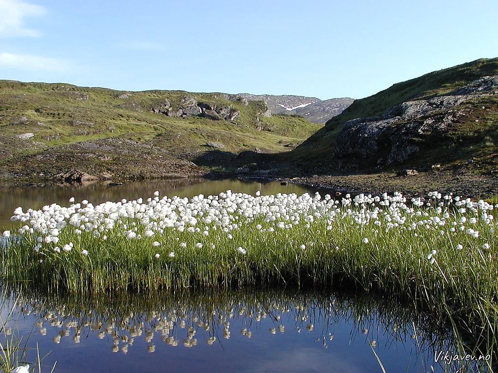 Myrull ved Gryteberget