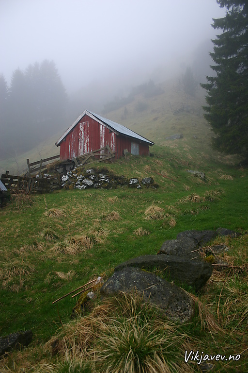 Uthus i Myrkaskog