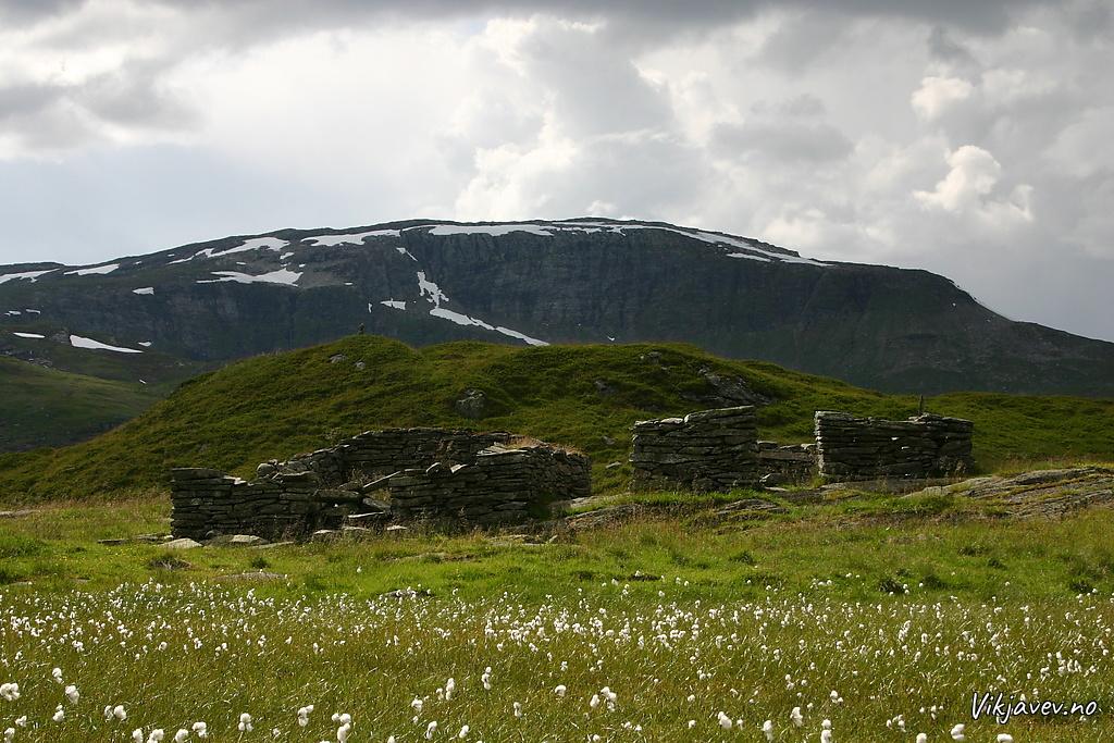 Seltufter i Bjørndalen