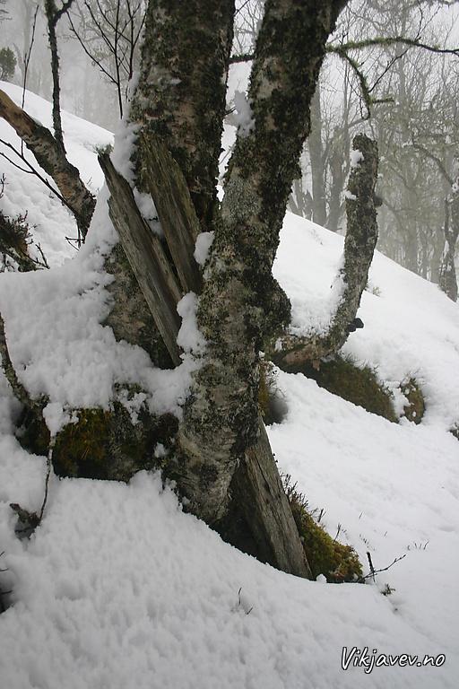Skiene på Skihaugen