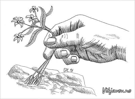 Hand og blome