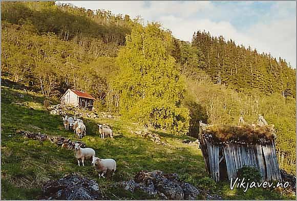 Kjengjasete / Nedste Nummedalsstølen